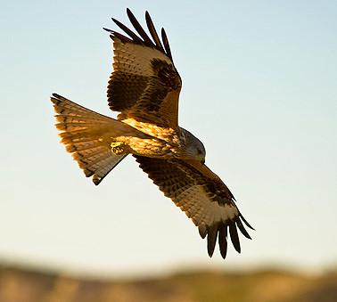 Birdwatching in Scotland